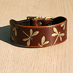 Buckle Collar Iridescent Dragonfly