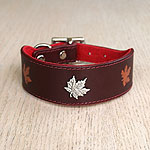 Maple Concho Leather Buckle Collar (1.5 inch wide)